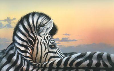 Golden Glow Zebra